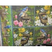 """Spring Birds"""