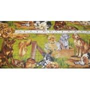 Various breeds of dogs by Kennard & Kennard