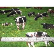 Cows by Elizabeth Studios #337