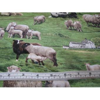 """""""Sheep"""" by Elizabeth Studios #360"""