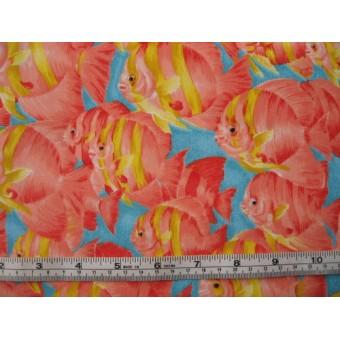 Orange Angelfish, VIP by Cranston